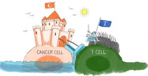 Cancer cell and T cell