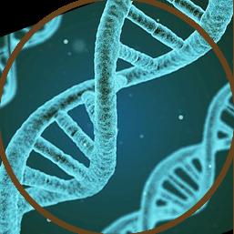 Myelodysplastic Syndromes Image